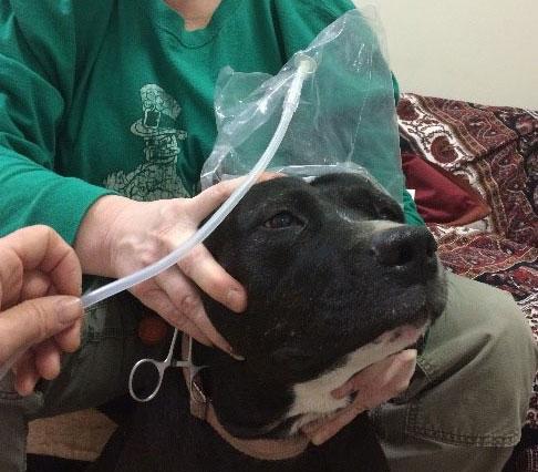 Ozone Therapy Holistic Veterinary Consultants